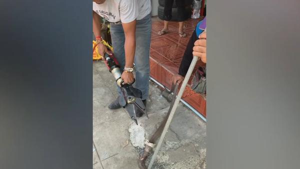 Rắn hổ mang chúa mắc kẹt trong bồn rửa nhà bếp - Sputnik Việt Nam