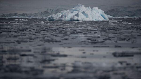 Những mảng băng trôi trong nước biển gần vịnh Fournier, Nam Cực - Sputnik Việt Nam