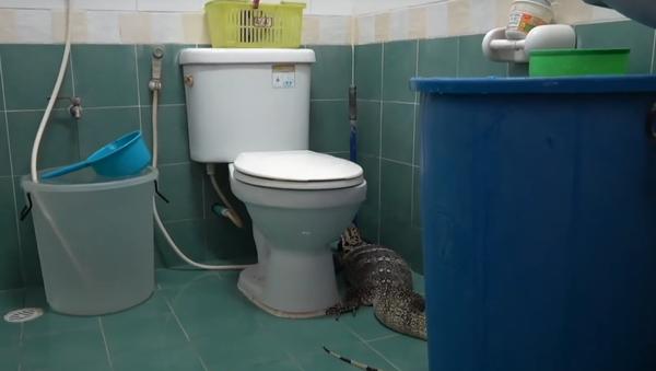 Thằn lằn khổng lồ quyết định tắm rửa dù chẳng ai mời - Sputnik Việt Nam