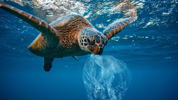 Hình ảnh con rùa với túi nhựa - Sputnik Việt Nam