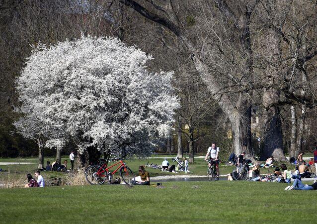 Các cư dân trong công viên dưới tán anh đào nở bừng ở Đức