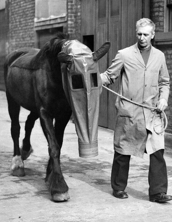 Mặt nạ phòng hộ cho ngựa để bảo vệ trước cuộc tấn công bằng khí độc, London, 1940 - Sputnik Việt Nam