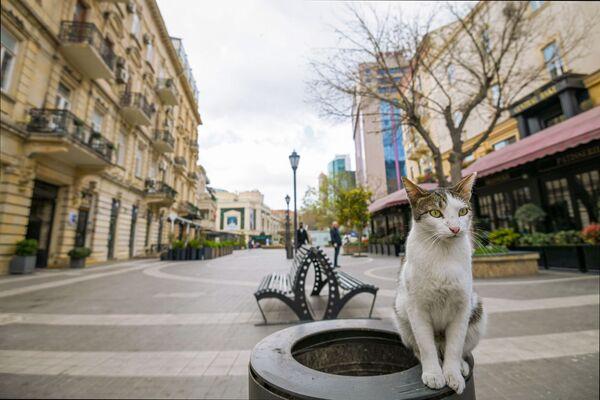 Con mèo trên con đường vắng ở thành phố Baku - Sputnik Việt Nam