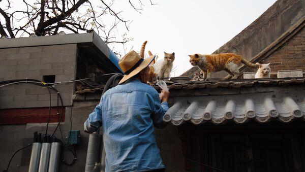 Thú cưng ở Trung Quốc - Sputnik Việt Nam