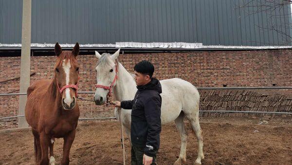 Con ngựa nhân bản đầu tiên sẽ xuất hiện ở Trung Quốc - Sputnik Việt Nam