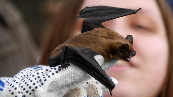 Bat từ Trung tâm phục hồi động vật hoang dã FINIST - Sputnik Việt Nam