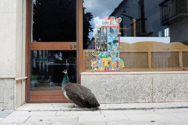 Công trước cửa một quán bar đang cách ly ở Ronda, Tây Ban Nha - Sputnik Việt Nam