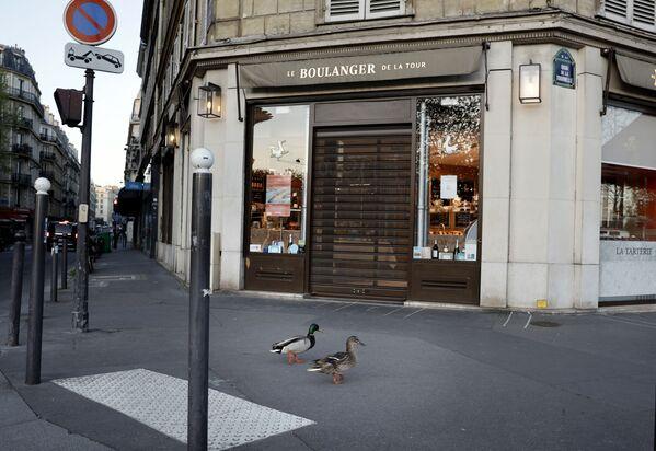 Bầy vịt dạo trên phố vắng ở Paris - Sputnik Việt Nam