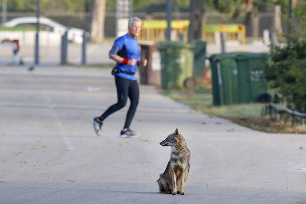 Chó rừng trong công viên ở Tel Aviv - Sputnik Việt Nam