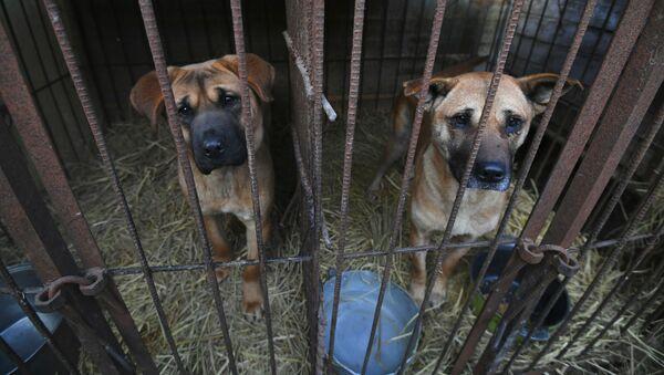 Chó trong chuồng tại một trang trại chó ở Honson, Hàn Quốc - Sputnik Việt Nam