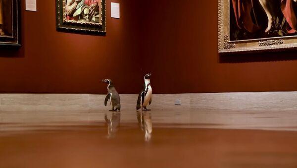 Bảo tàng nghệ thuật Nelson-Atkins. - Sputnik Việt Nam