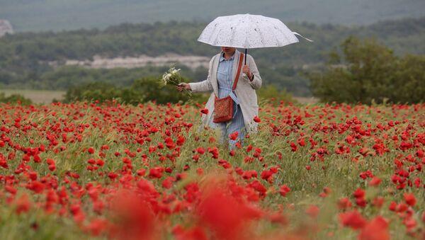 Cô gái với chiếc ô trên cánh đồng hoa anh túc ở Crưm - Sputnik Việt Nam