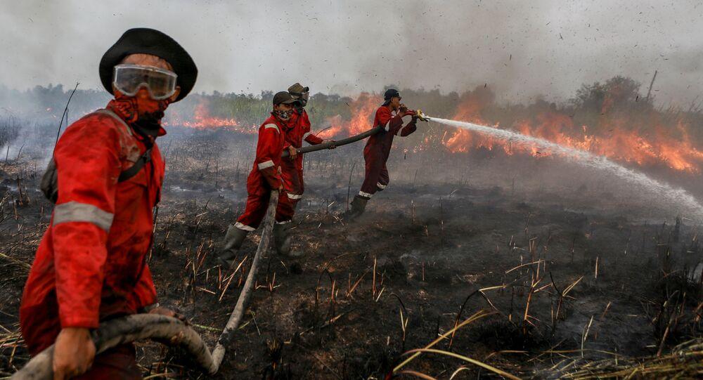 Lính cứu hỏa dập tắt đám cháy trên cánh đồng ở hạt Ogan-Ilir ở Nam Sumatra, Indonesia