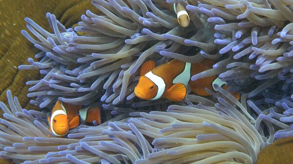 Cá ở Rạn san hô Great Barrier, Úc - Sputnik Việt Nam