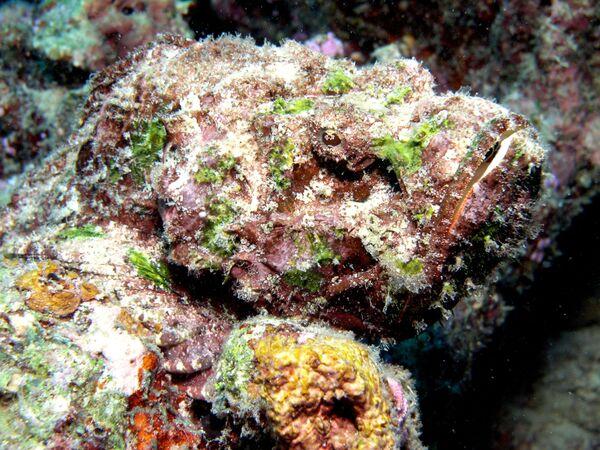 Cá mặt quỷ dưới đáy biển - Sputnik Việt Nam
