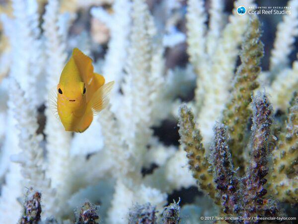 Cá và san hô ở Rạn san hô Great Barrier, Úc - Sputnik Việt Nam