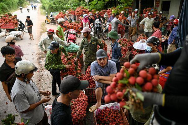 Nông dân Việt Nam đang bán vải thiều thu hoạch được ở ngoài chợ - Sputnik Việt Nam