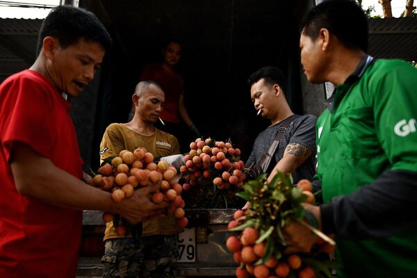 Thương nhân Việt Nam đang đánh giá chất lượng vải thiều vừa mua - Sputnik Việt Nam