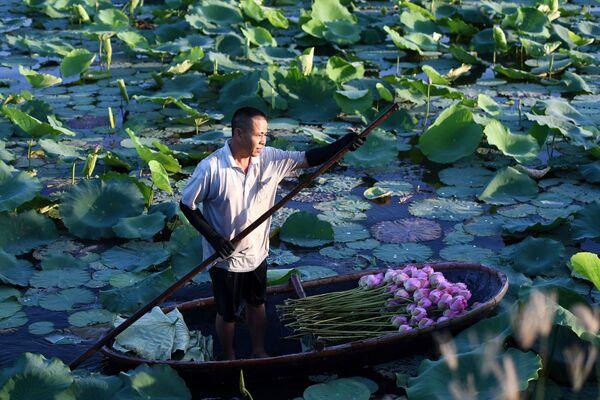 Trên con thuyền với sen ở vùng Hồ Tây, Hà Nội - Sputnik Việt Nam