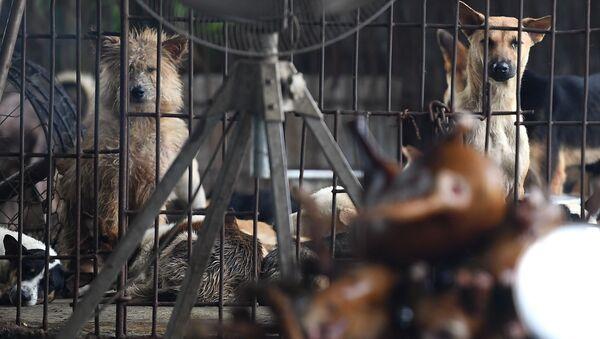 Chó trong chuồng, Hà Nội - Sputnik Việt Nam