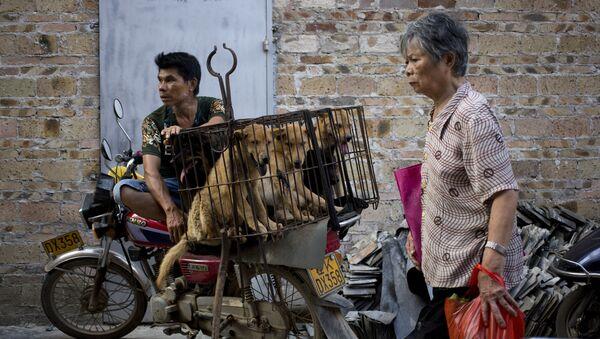 Người bán chó chờ người mua tại lễ hội thịt chó - Sputnik Việt Nam