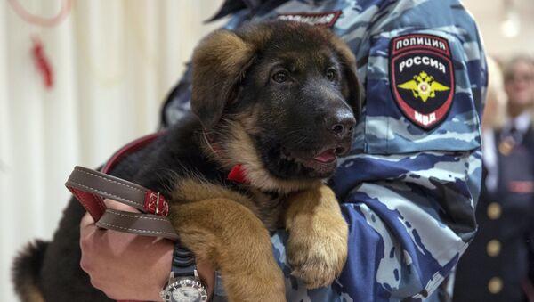 Nhân viên cảnh sát Nga ôm chú cún Dobrynya - quà tặng dành cho cảnh sát Pháp - Sputnik Việt Nam